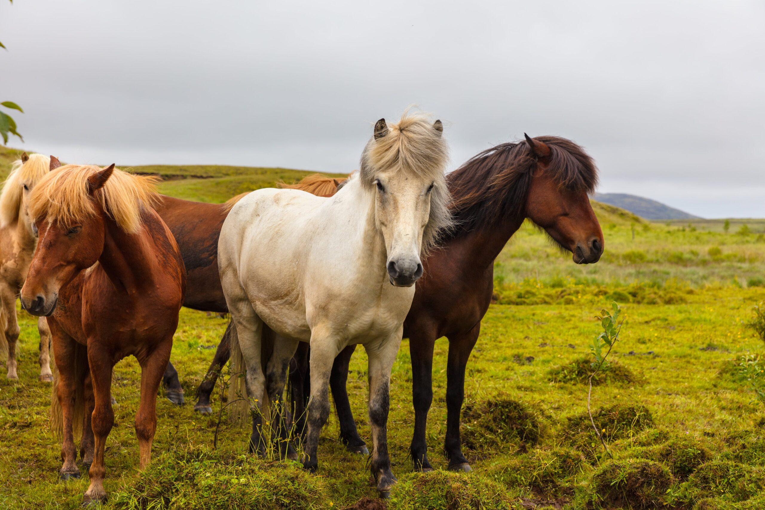 Gli integratori per il benessere dei tuoi cavalli